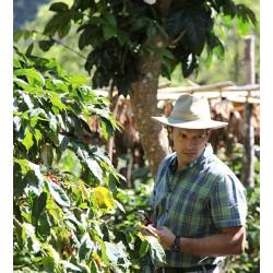 Café arabica du Guatemala La Bolsa Le Torrefacteur.
